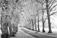 Winner: Brian Cooke - Avenue of Trees