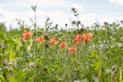 6048-Wild-Flowers-and-Butterflies-DSC_1650