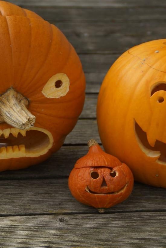 Rothamsted Pumpkin Week (Wednesday)