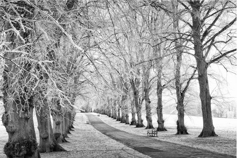 Winners announced: Rothamsted in Winter photography competition
