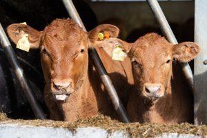 North Wyke Livestock
